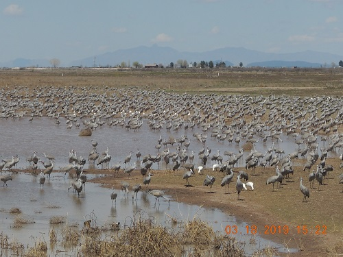 many cranes near water